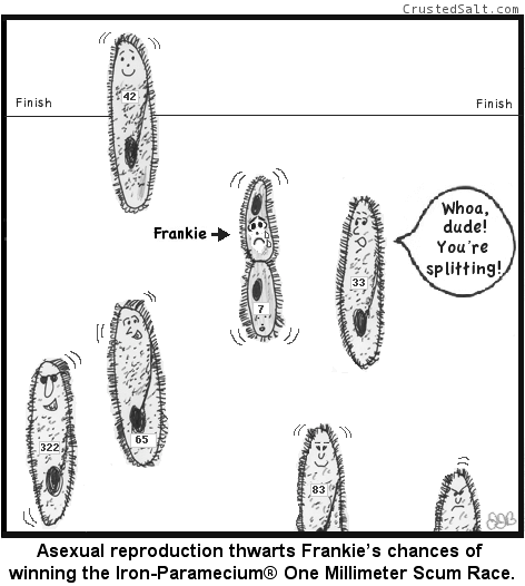 a paramecium goes through asexual reproduction during a scum race